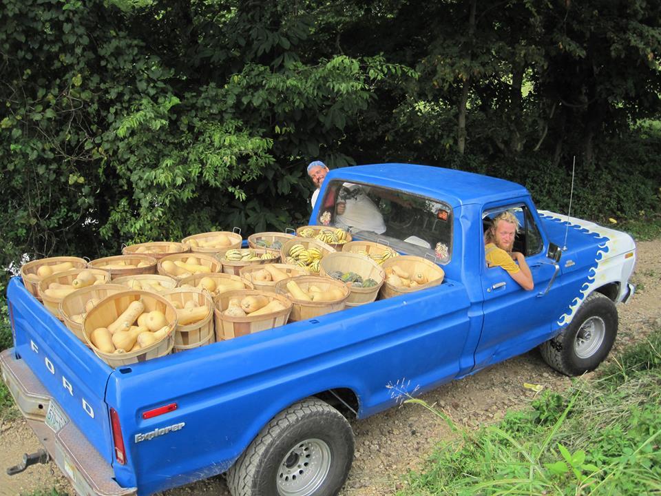 butternuts, farm, organic