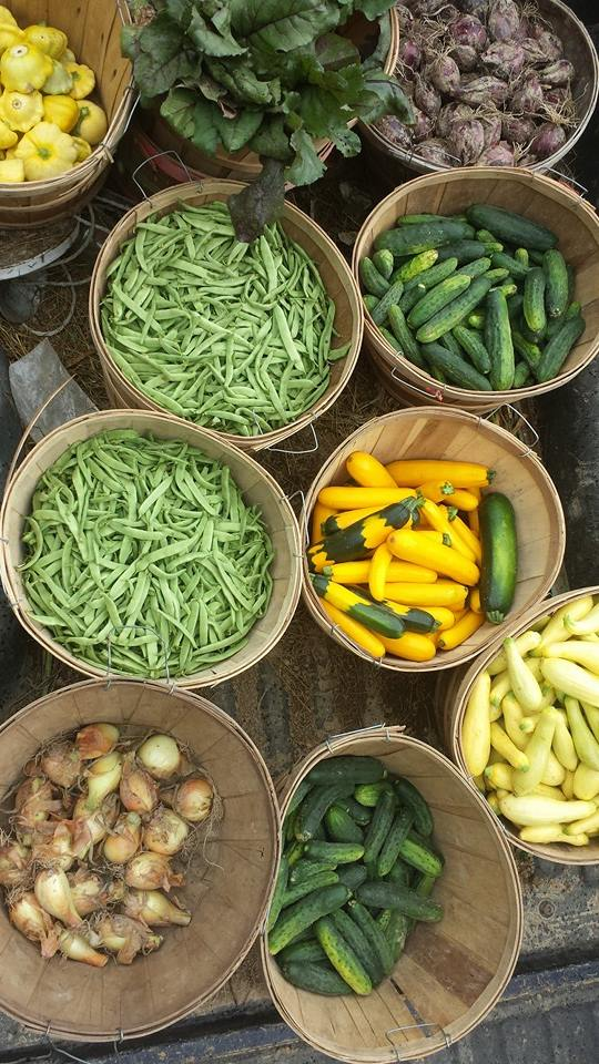 Green beans, onions, and summer squash