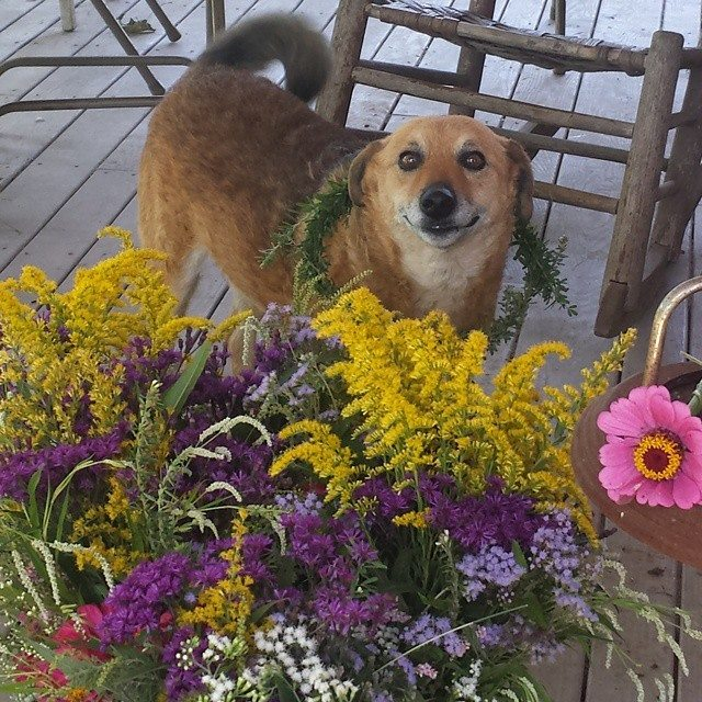 farm dog flowers pretty bouqet