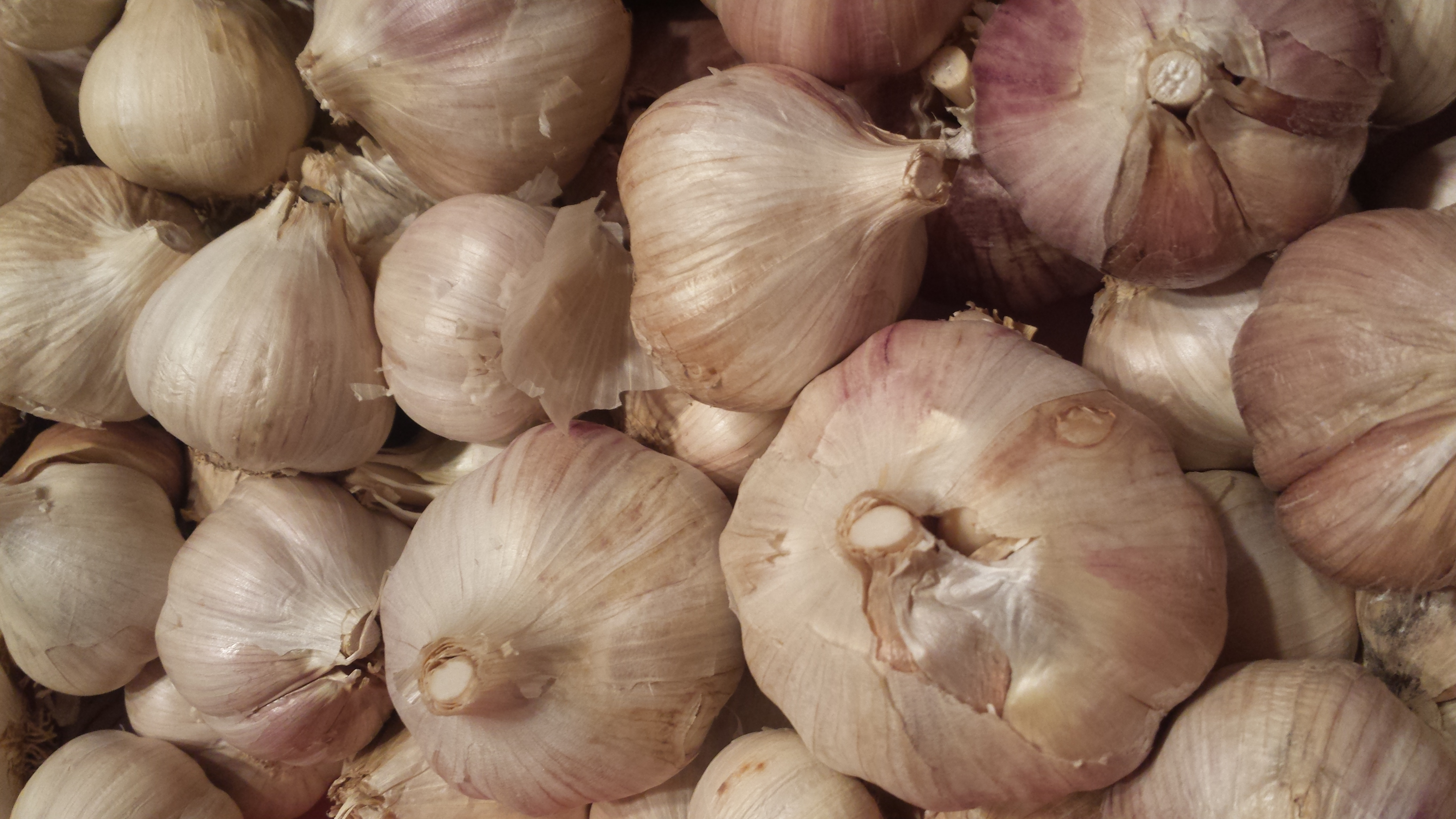 organic garlic picture close