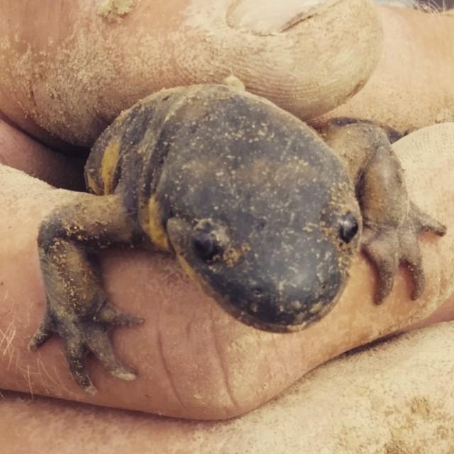 salamander organic tn biodynamic farm