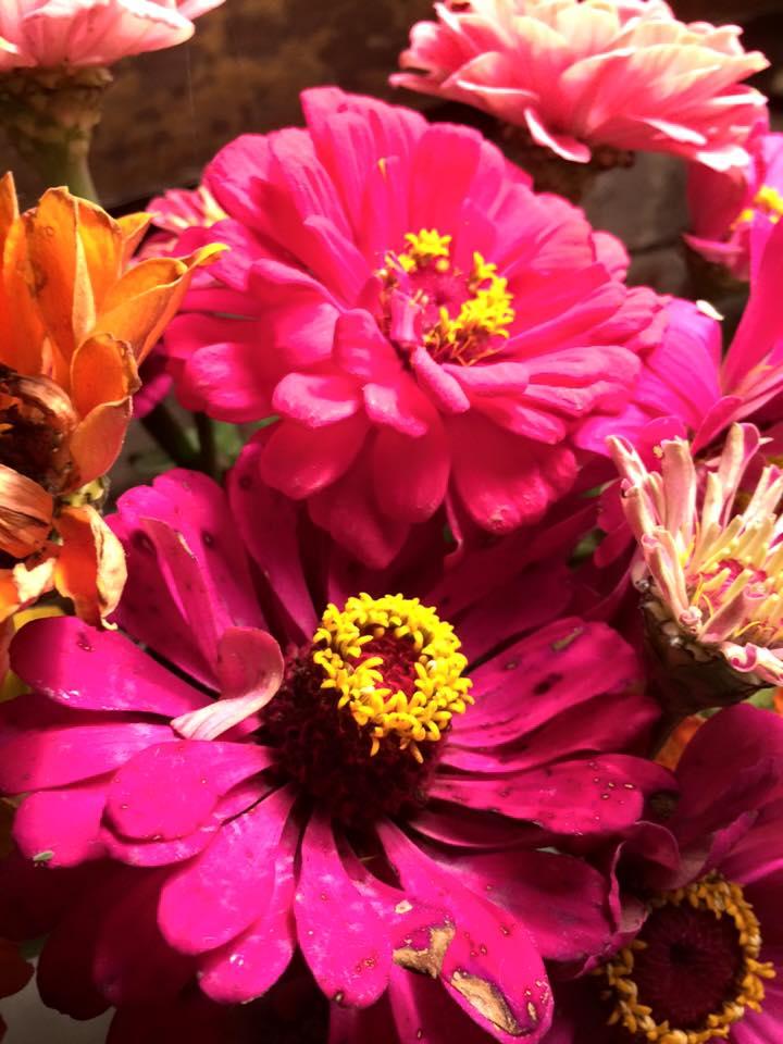 flowers bdc 2015