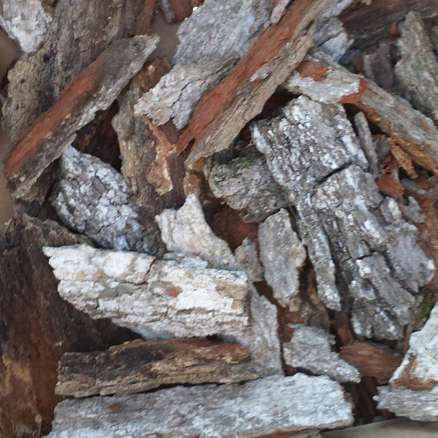 white oak bark
