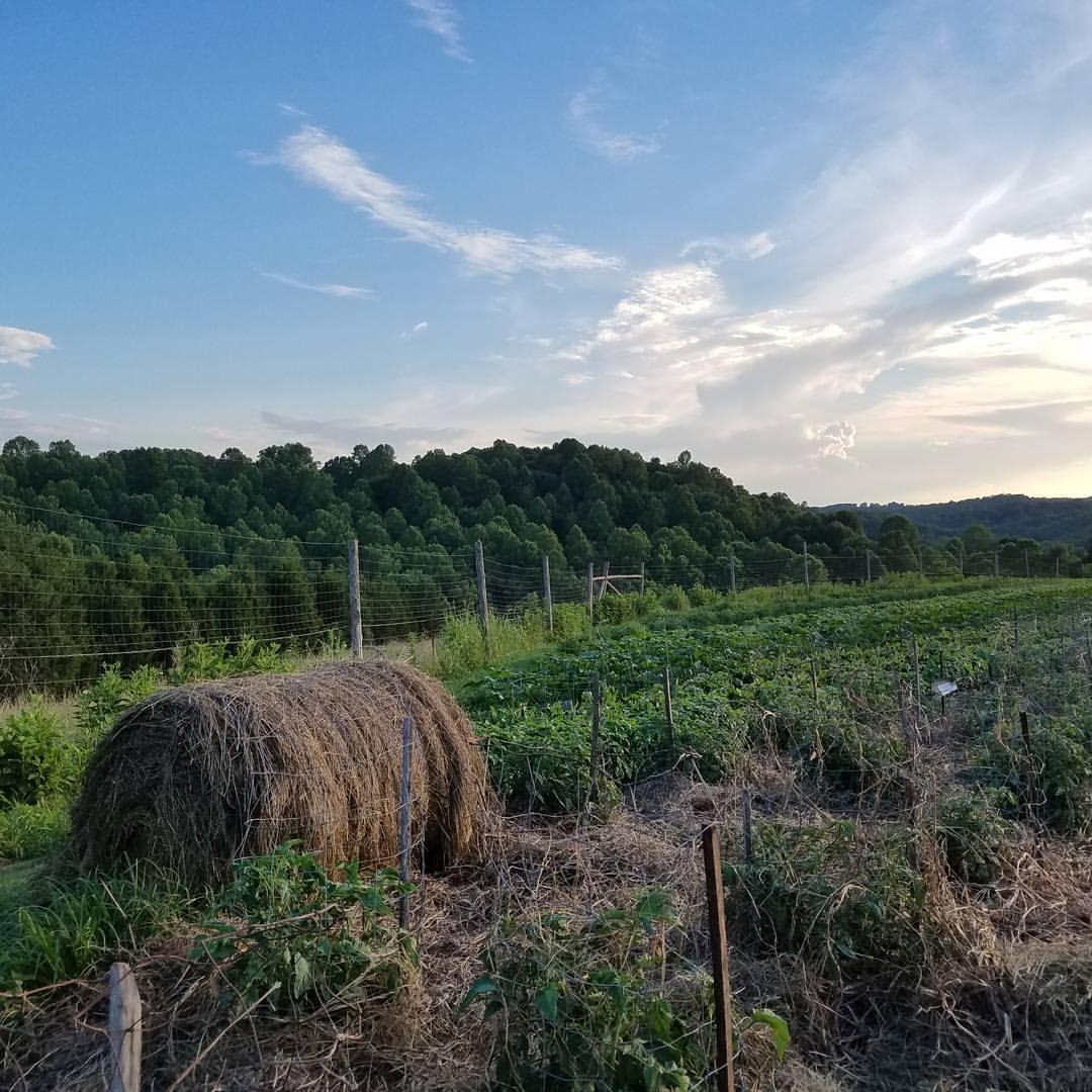 Organic garden hay bale blue sky